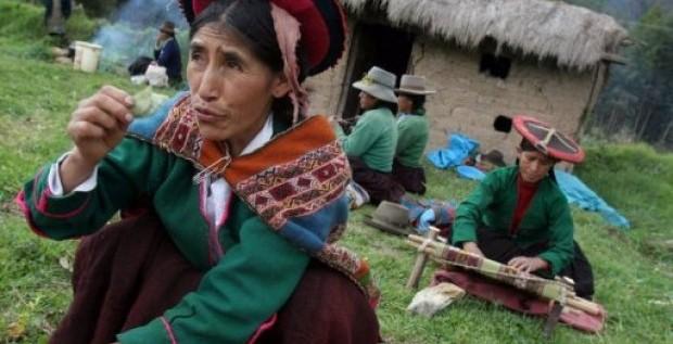 Perú erradicará en 2012 un total de 14.000 hectáreas de cultivos de drogas