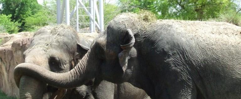 """Los elefantes del """"espectáculo más grandioso de la tierra"""" viven en Florida"""