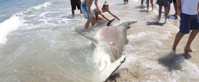 Florida es líder mundial en ataques de tiburón