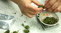 Florida le dice sí a la marihuana para uso medicinal