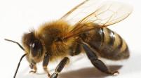 Este verano, protéjase de las picaduras de los insectos
