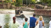 Busch Gardens celebra el Día Mundial del Elefante