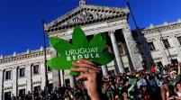 Uruguay: más de 20 empresas compiten por marihuana