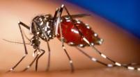 Datos sobre chikungunya, virus transmitido por mosquitos
