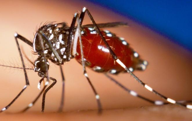 La fiebre de chikungunya se afianza en Estados Unidos