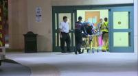 Oso causa tres muertos y ocho heridos accidente vial en Florida