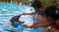 SeaWorld ya no permitirá que visitantes alimenten a delfines