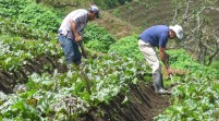 Agricultores hispanos pugnan por mejoras laborales
