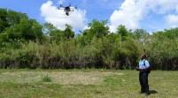 Drones y perros intentan salvar el aguacate en Florida