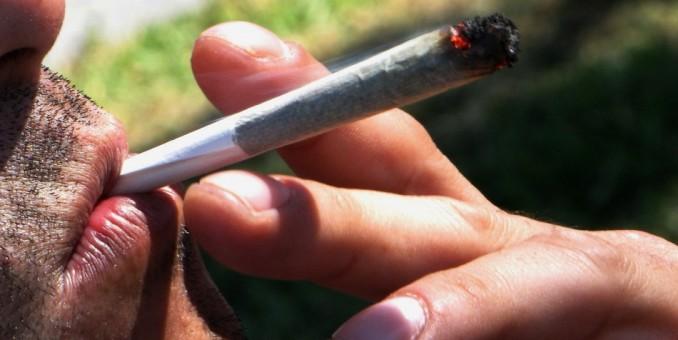El 16,5 % de población de América consumió marihuana el último año, según OEA