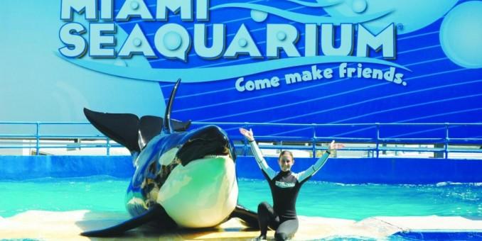 """Demandarán a acuario de Miami por """"confinamiento"""" de una orca durante 40 años"""