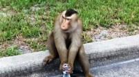 Mono suelto se divierte en un suburbio de Orlando