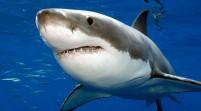 Migración de tiburones causa alarma en playas de Miami Beach