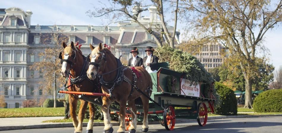 Llega enorme árbol navideño a la Casa Blanca